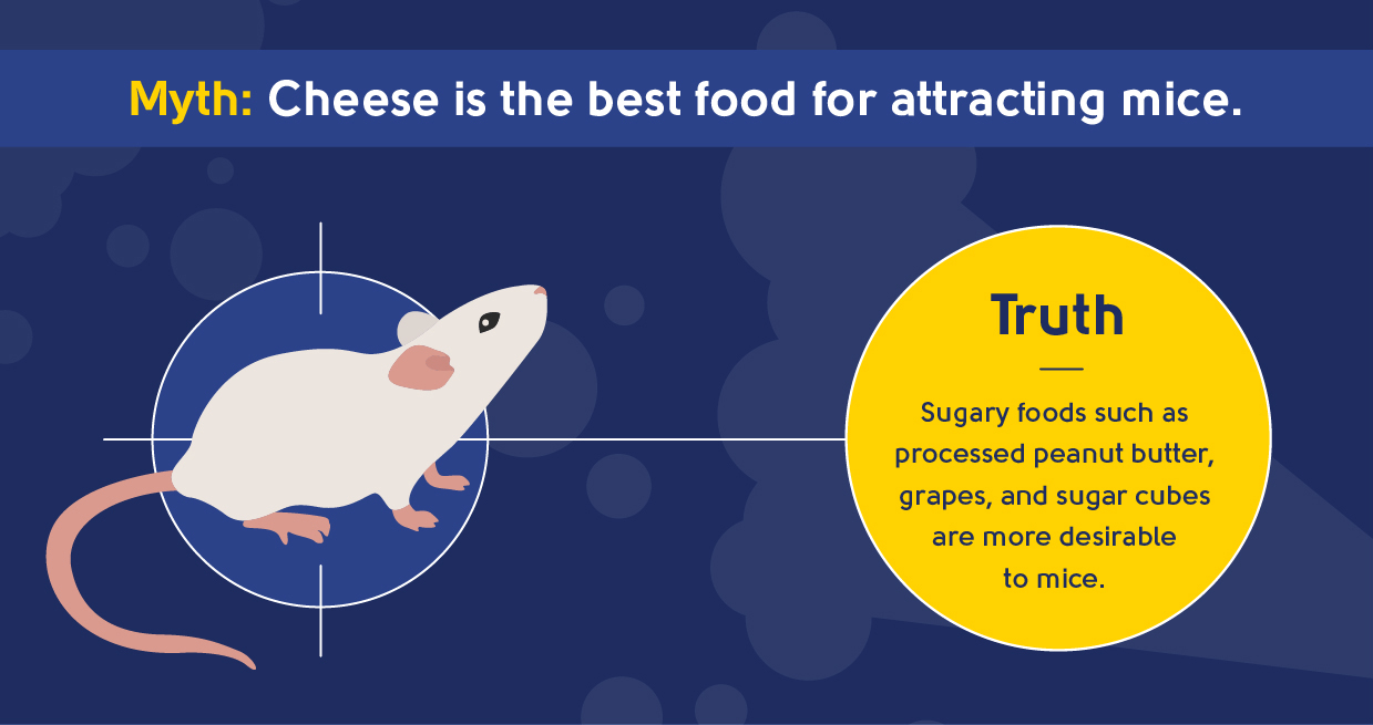 pest control myth - cheese is the best food for attracting mice