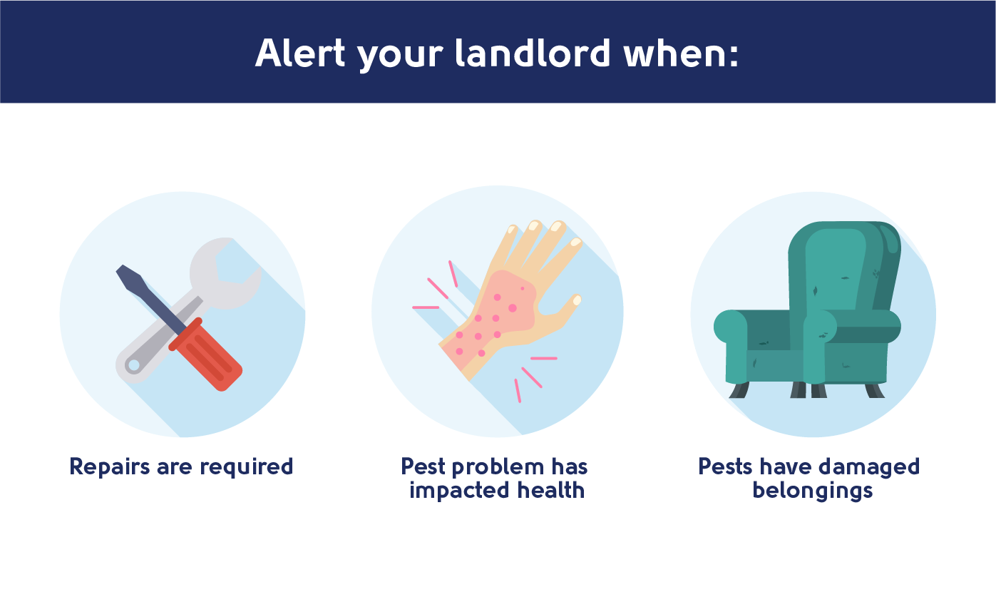 when to alert your landlord about a pest problem