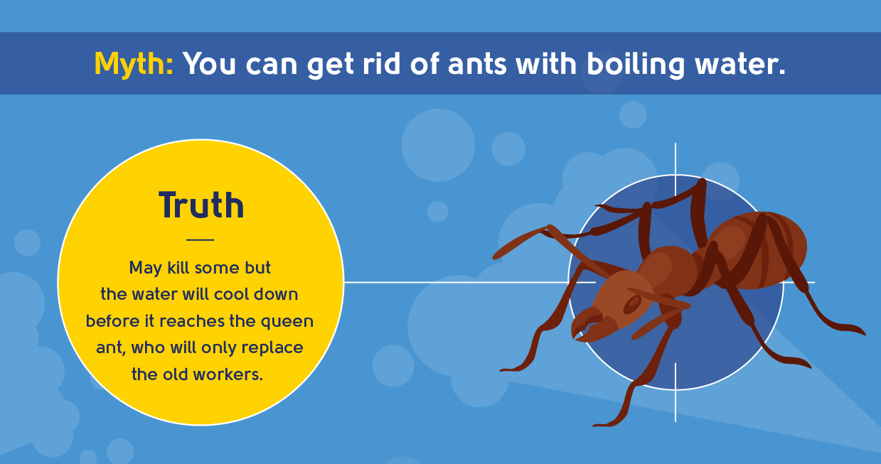 myth - you can get rid of ants with boiling water