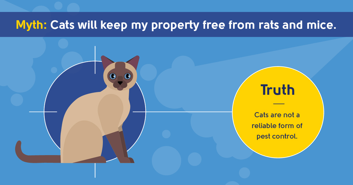 myth - cats will keep my property free from rats and mice